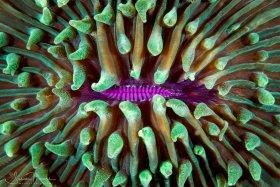 Mushroom Coral pattern.  Lembeh, Indonesia