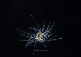 Unidentified Worm larva