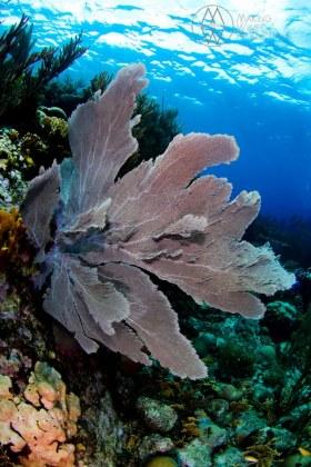 Sea Fan Anyone? - Shallow Reef in Curaçao