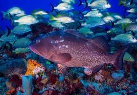 Going Against Traffic - 80' Reef in Jupiter, FL