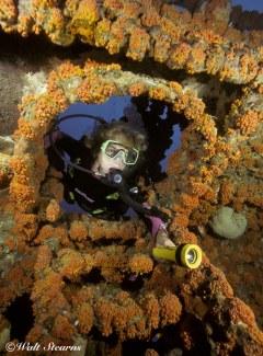 Diver Exploring Wreck