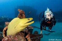 Diver & Green Moray