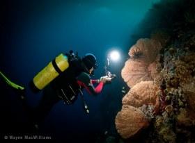 Photog doing his thing. Bali. © Wayne MacWilliams, All Rights Reserved.
