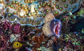 Eel displaying it's pearly whites. Philippines