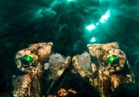 In camera triple exposure of dusky jawfish. BHB