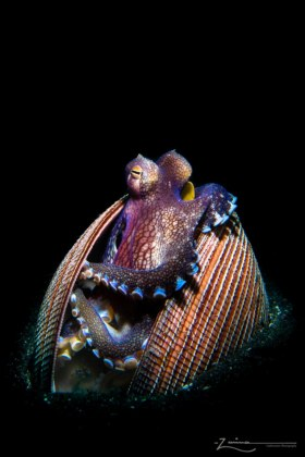 Jewelry Box.  Photographed in Lembeh, Indonesa