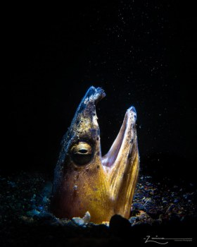 Photographed in Lembeh, Indonesia
