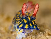February 2014 Masters - Sea Slug Flair
