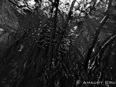 September 2014 Masters - Trees