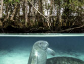 March 2015 Masters - Manatee Madness