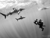June 2015 Masters - Creative Black & White with Diver