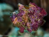 January 2016 Masters - Frogfish