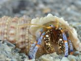 May 2016 Challengers - Mobile Homes (Hermit Crabs)