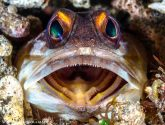 May 2016 Masters - Jawfish