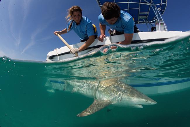 SharkAgg2