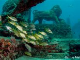 August 2016 Challengers - Artificial Reef, Not A Boat