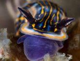 February 2018 Challengers - Sea Slugs