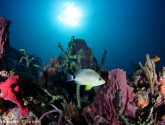 June 2018 Masters - Rainbow Reefs