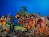 April 2020 Challengers - Seascapes W/A