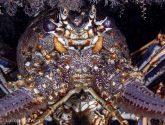 June 2020 Challengers - Lobsters