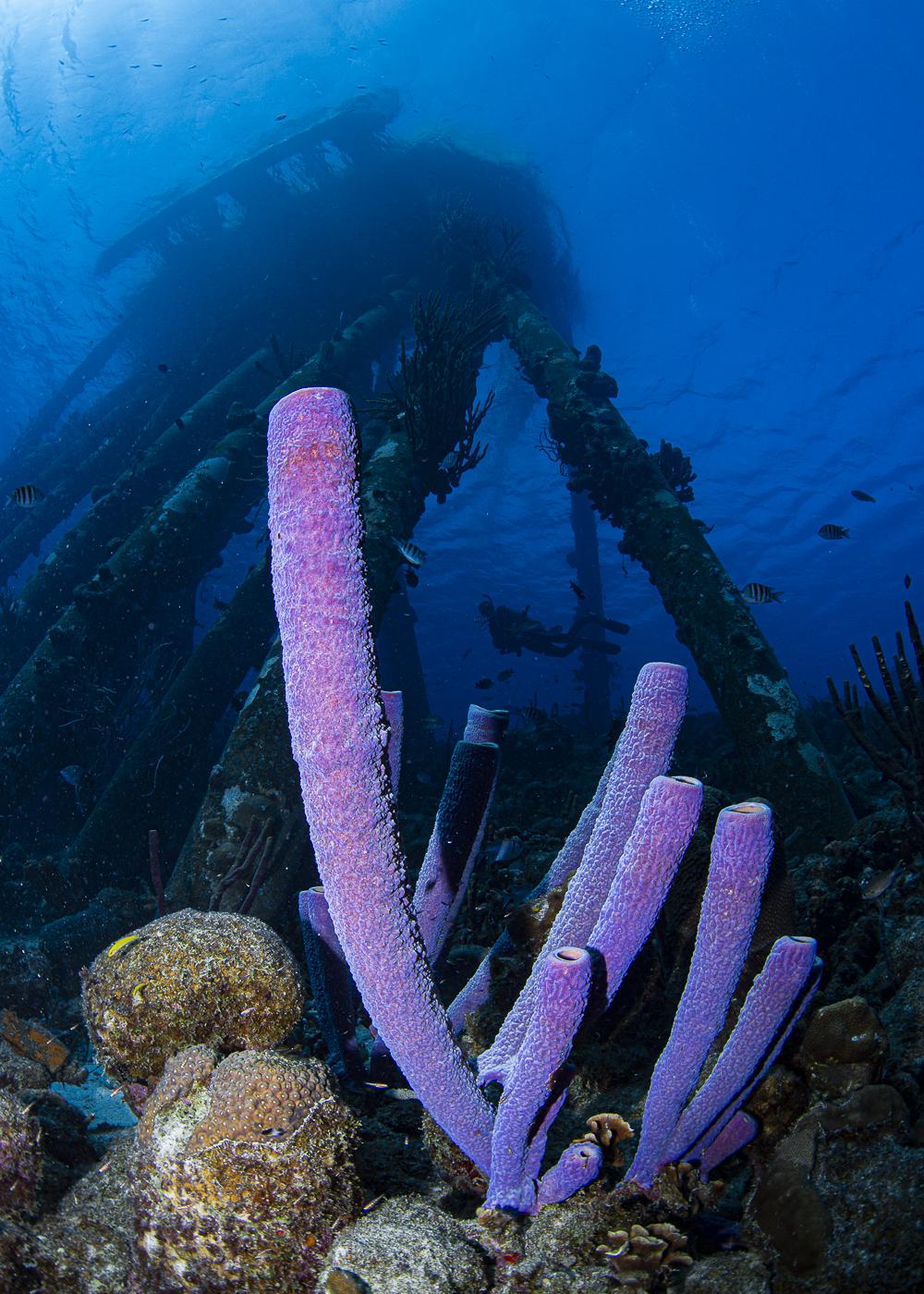 spongepierdiver
