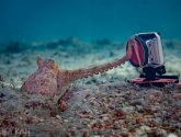September 2020 Challengers - Underwater LOL