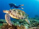 November 2020 Challengers - Turtles
