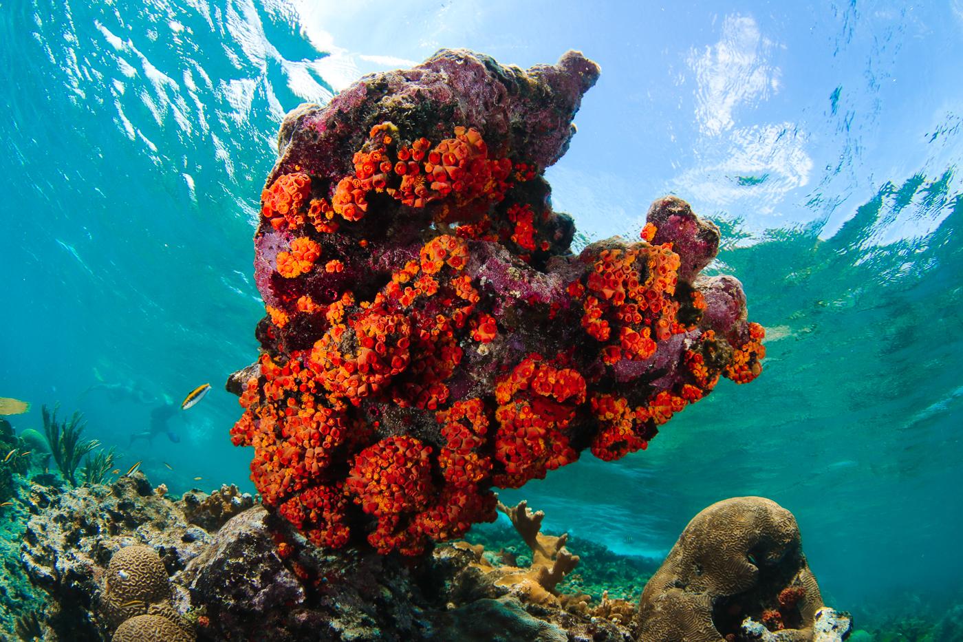 heart of sponges