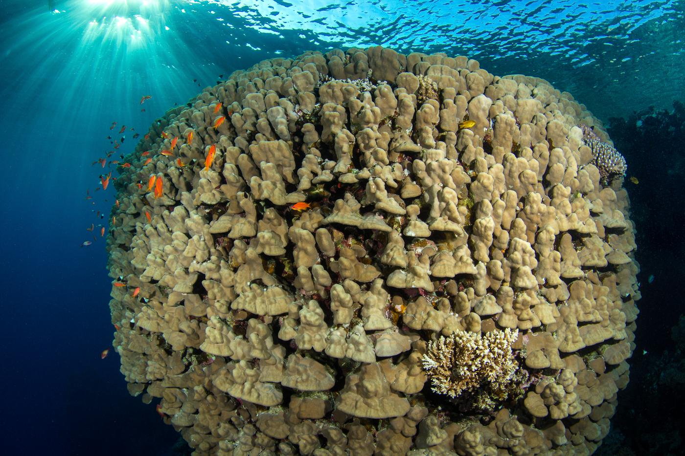 coral ball