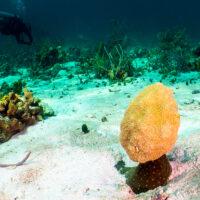 vince lombardi coral