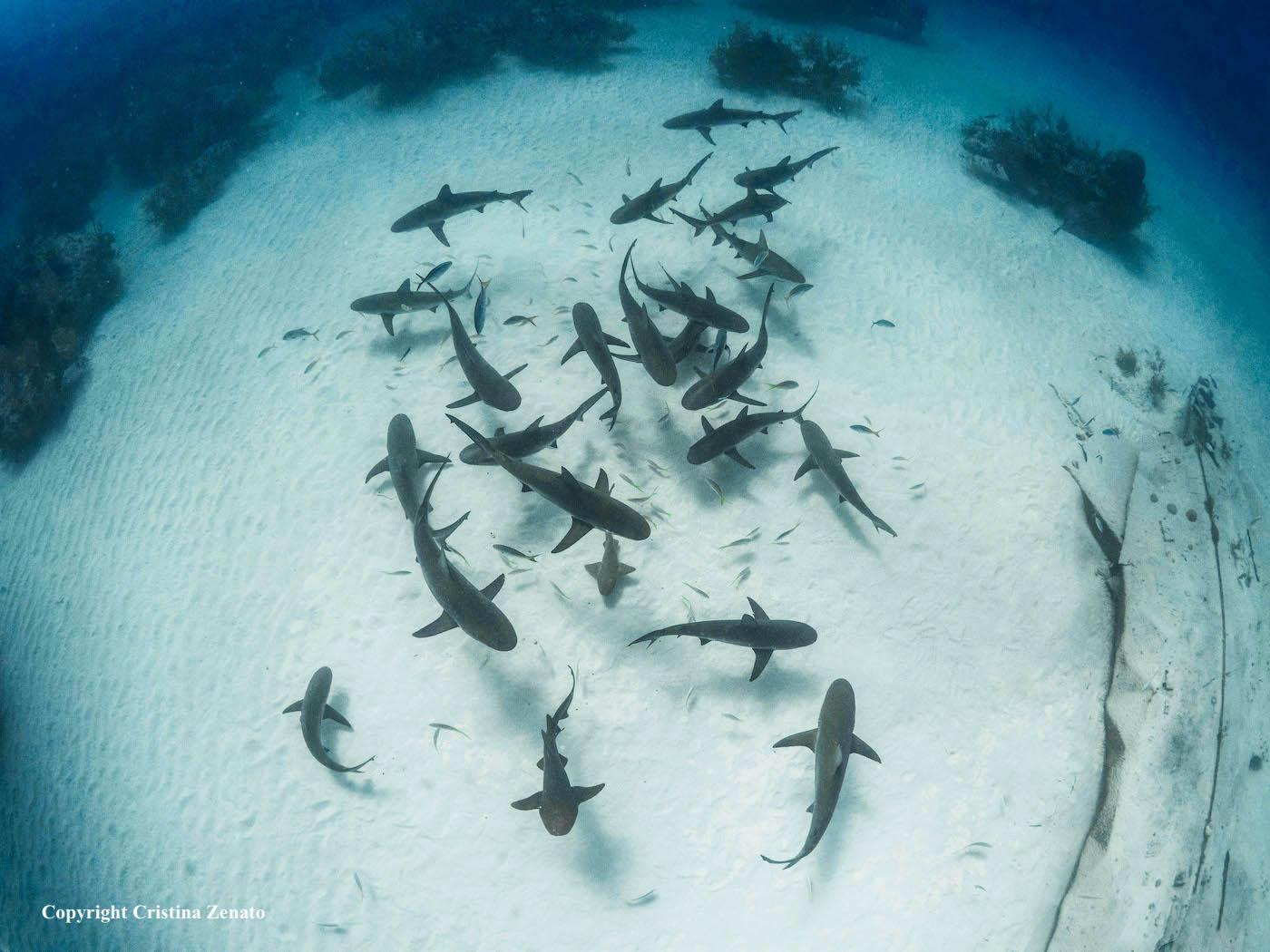 My sharks-