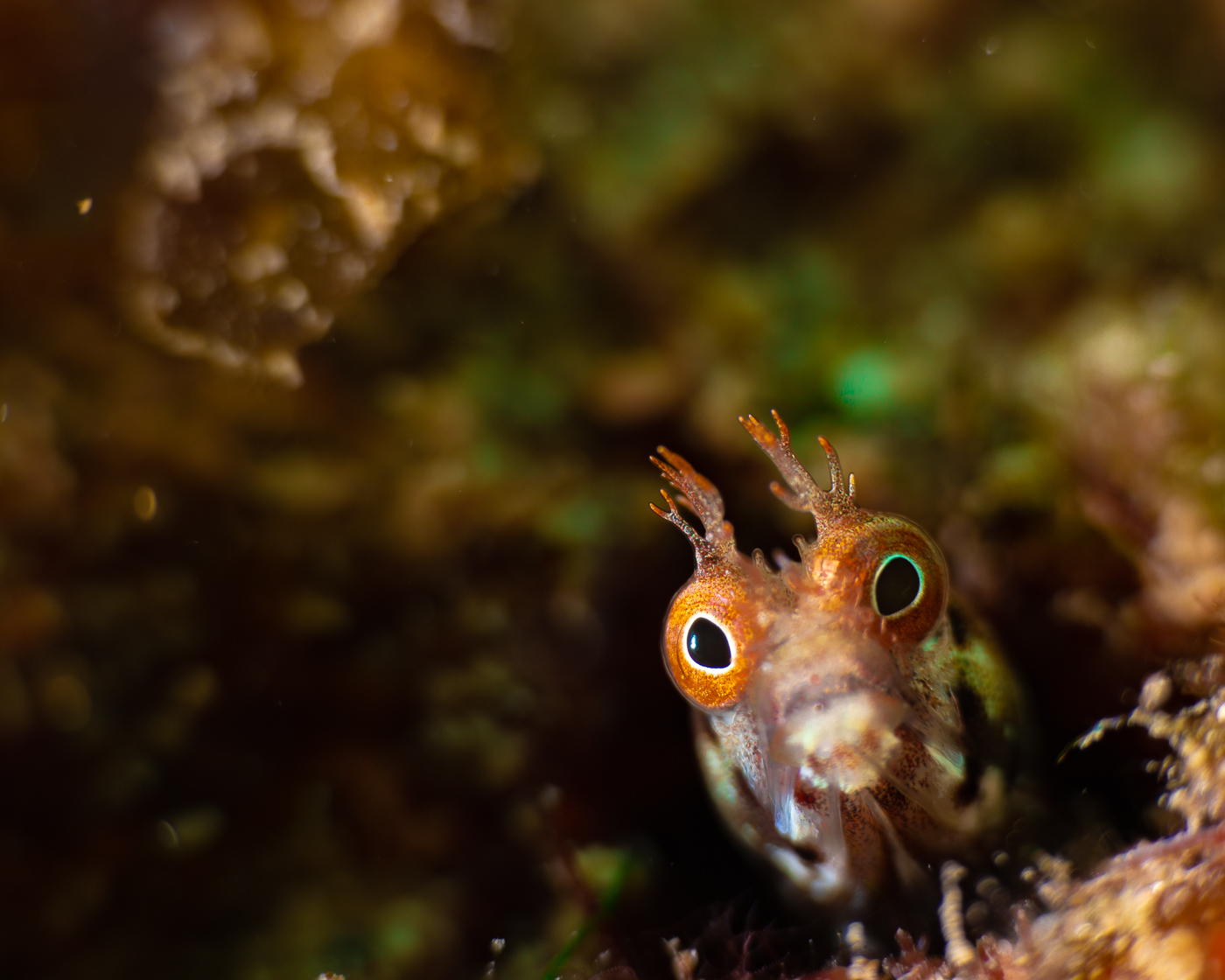 little blenny in a big world