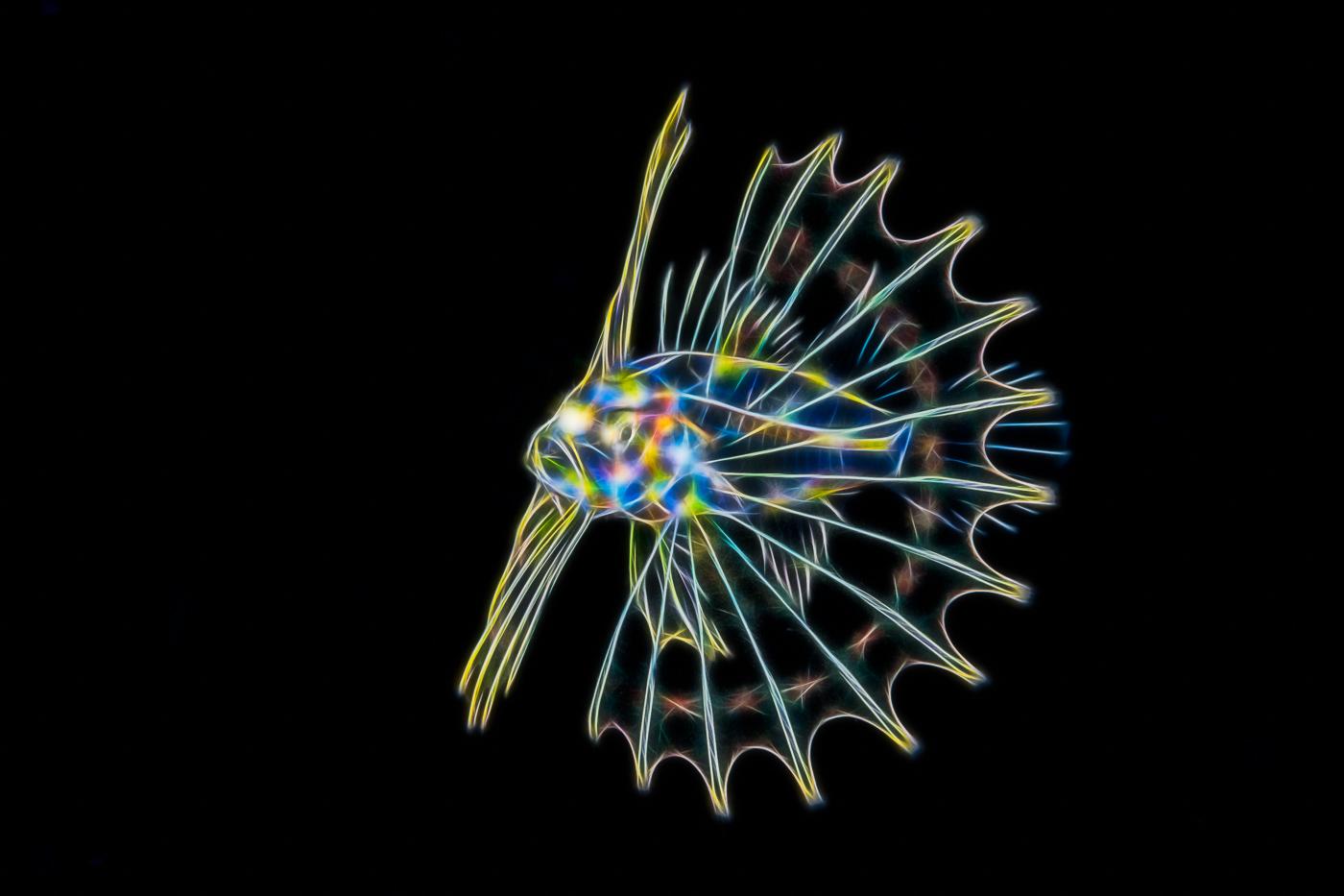 fractal lionfish
