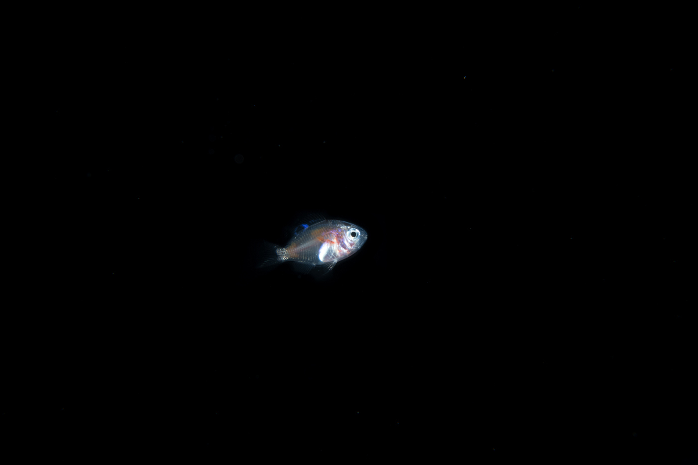 space fishy